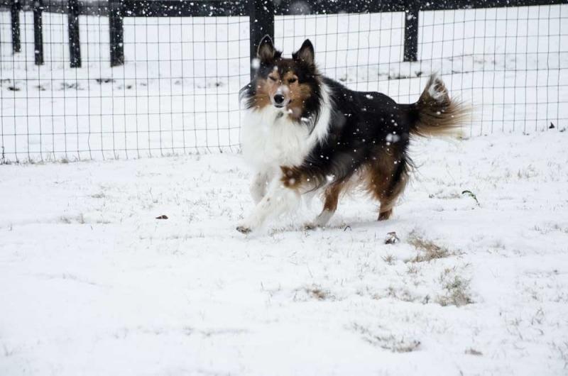 Kipper-snowweb