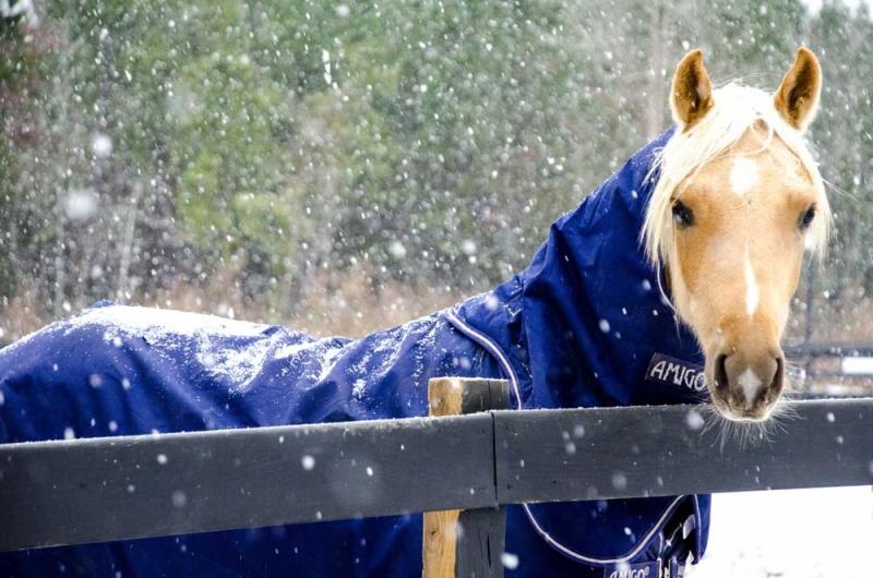 Nefario-snow
