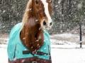 Dozer-snowweb