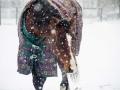 Fina-snowweb